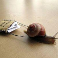 recevoir-mail-escargot