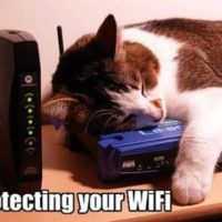 chat-securite-wifi
