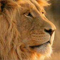 apple-mountain-lion