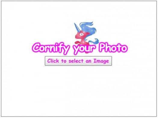 photo-licorne