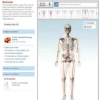 anatomie-en-ligne