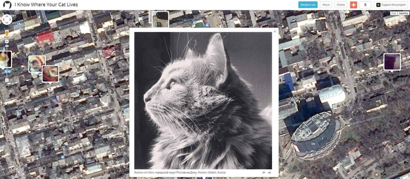 carte-chats-2