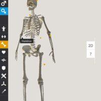 anatomie-corpus