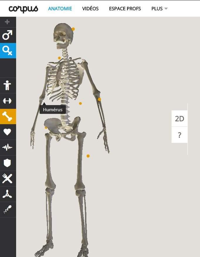 Exploration en ligne du corps humain, Corpus