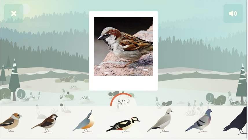 birdlab-oiseau