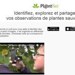 Identifier les plantes en les prenant en photo