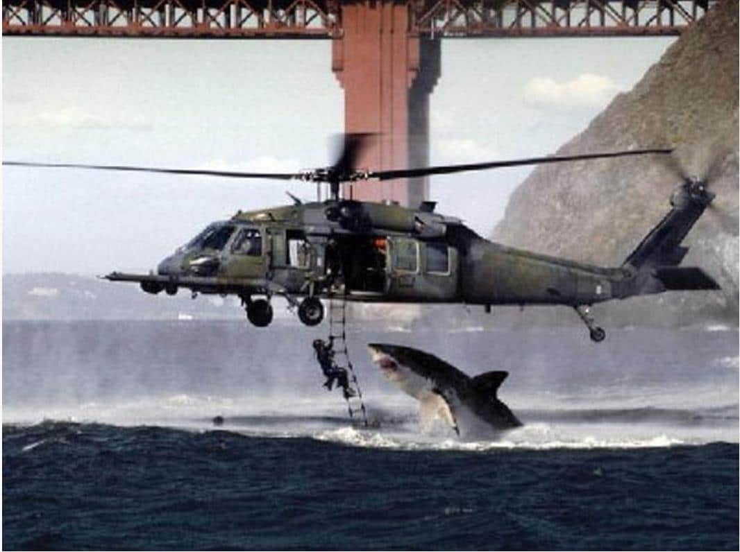 requin-helicoptere